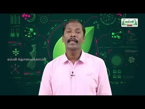 வகுப்பு 10அறிவியல் அலகு 12தாவர உள்ளமைப்பியல் மற்றும் தாவர செயலியல்பகுதி1  Kalvi TV