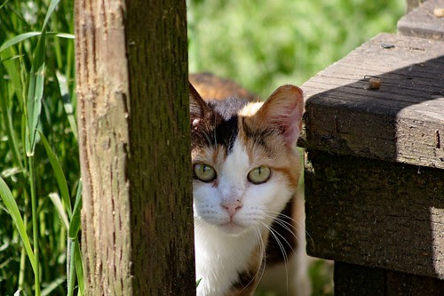 Calico Feral Cat At Feeding
