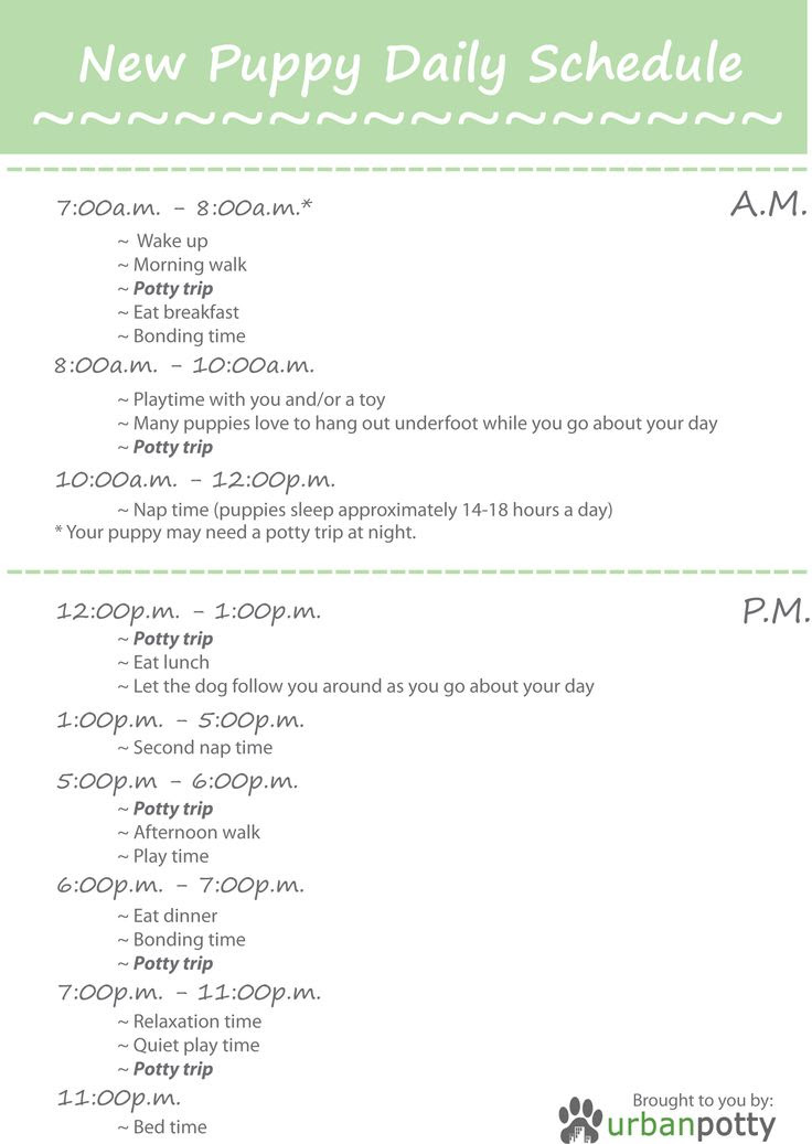 Printable Checklist by Urban Potty: New Puppy Daily Schedule ...