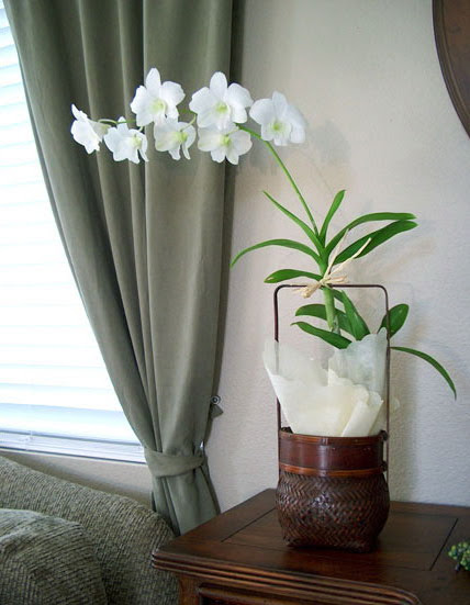 Orchids In Interior Decorating   Shelterness