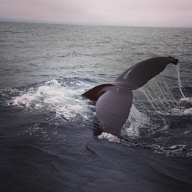 Day205 Went Whale Watching! 7.24.13 #jessie365 #whale #santabarbara #condorexpress
