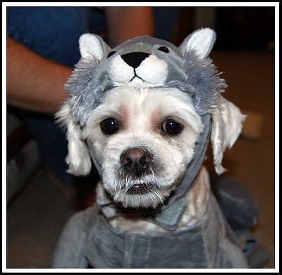 I is a  SQUIRREL!!!!!