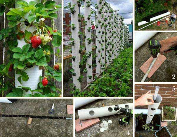 AD-Gardening-Tips-7