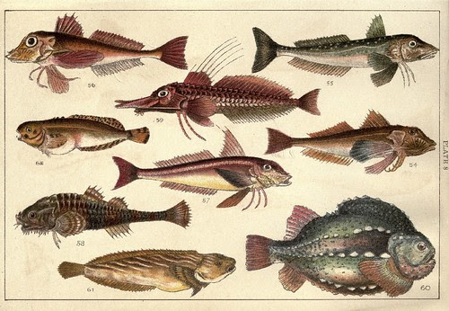 Our country's fishes and how to know them - a guide to all the fishes of Great Britain WJ Gordon 1902 a