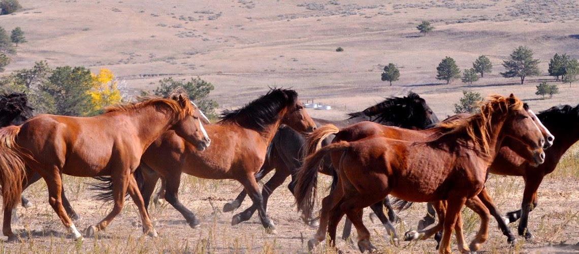 http://www.westernjournalism.com/wp-content/uploads/2014/04/wild-horses-1140x500.jpg