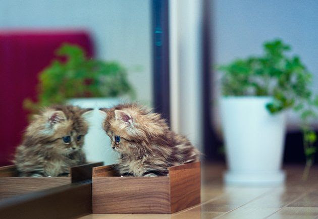 She may be just a kitten but Daisy is taking the Internet by storm.   The 11-month-old Traditional Persian kitty was adopted by Tokyo-based photographer and translator Ben Torode and his wife, Miki, last May and nearly died due to a parasitic infection.  The couple nursed Daisy back to health and Torode began photographing their adorable addition and posting the pics online for the world to see.