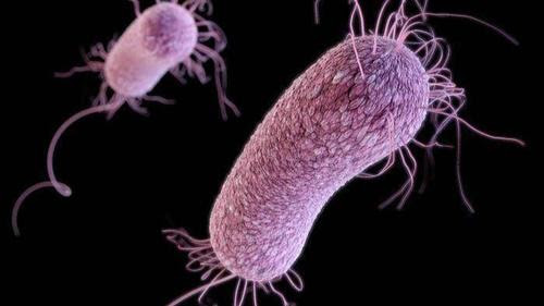 This CDC illustration shows the structure of antibiotic-resistant pseudomonas aeruginosa bacteria.