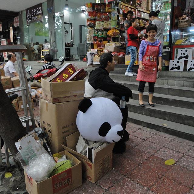Panda rest break, Chengdu