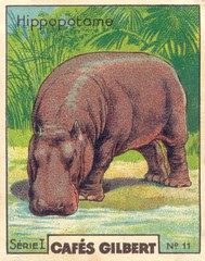 gilb hippopotame
