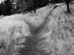 trail-fork