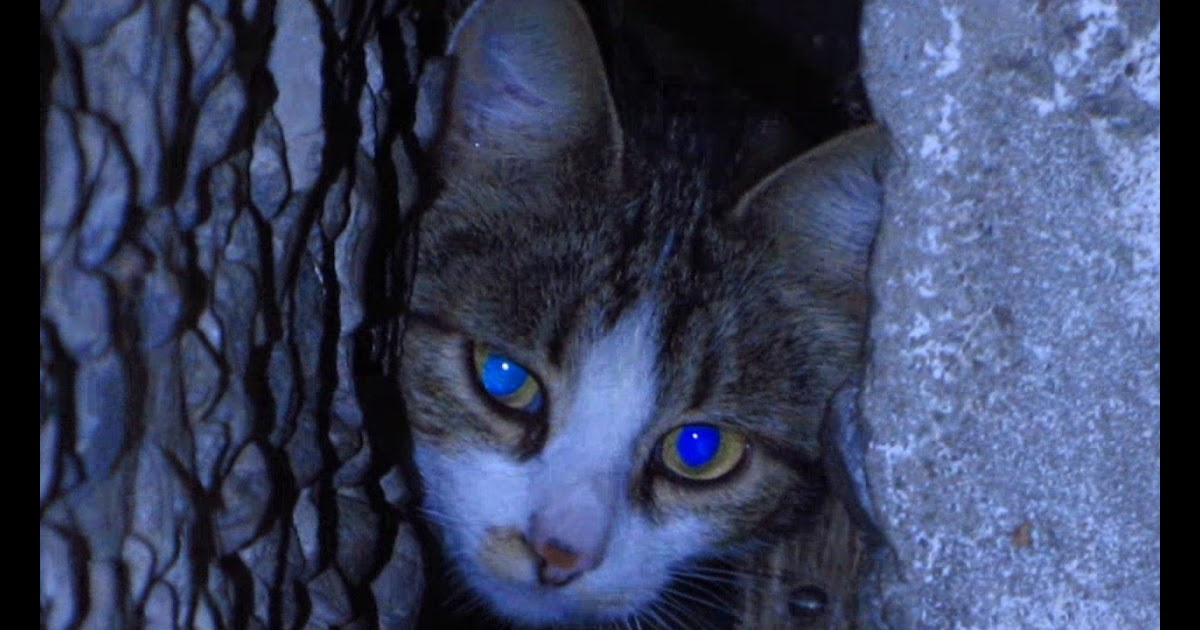 What Is Your Background Mean Robin Seplut Wikipedia Kittens With Cats In The Rain Early Morning