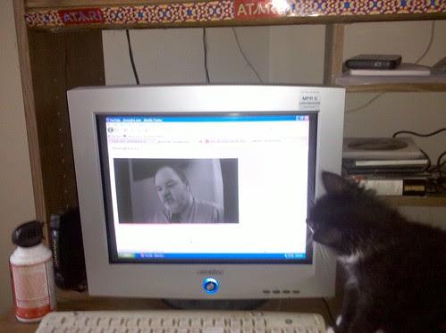 Biscuit watching Geauxjira