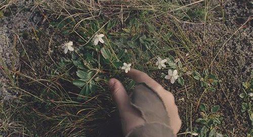 """Noé diz a seu filho """"Você vê como as flores são coladas ao chão? Sua onde eles deveriam estar. Eles têm um propósito."""""""