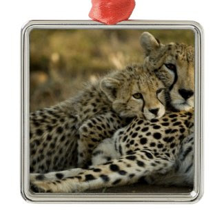 Cheetah, Acinonyx jubatus, with cub in the Masai 2 Christmas Tree Ornaments