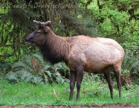 Northwest Wildlife, Temperate Rainforest Animals