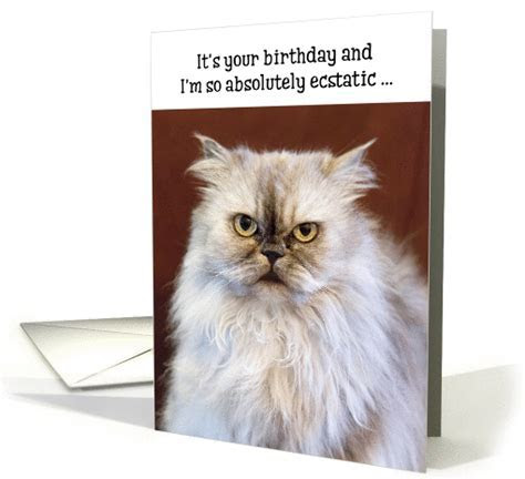 Humorous Birthday Card   Ecstatic Persian Cat card (1370848)