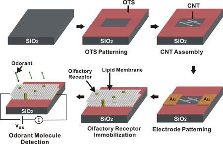 fabricando una nariz humana con nanotecnología