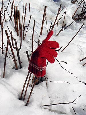 petit gant isolé.jpg
