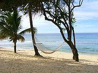 A w:Hammock on a tropical beach.