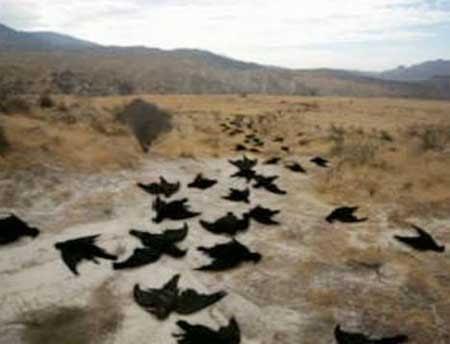 Chuva de pássaros mortos