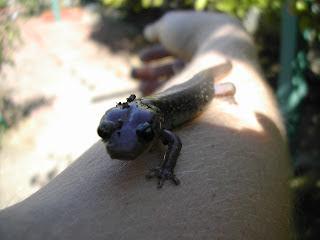Cute Newt