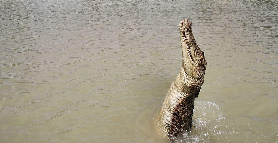Helga Broel, Jumping Crocodile