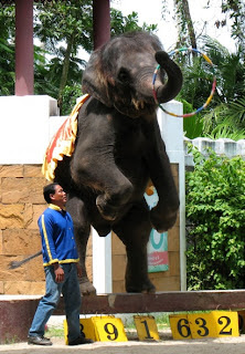 Elephant show at Phuket Zoo