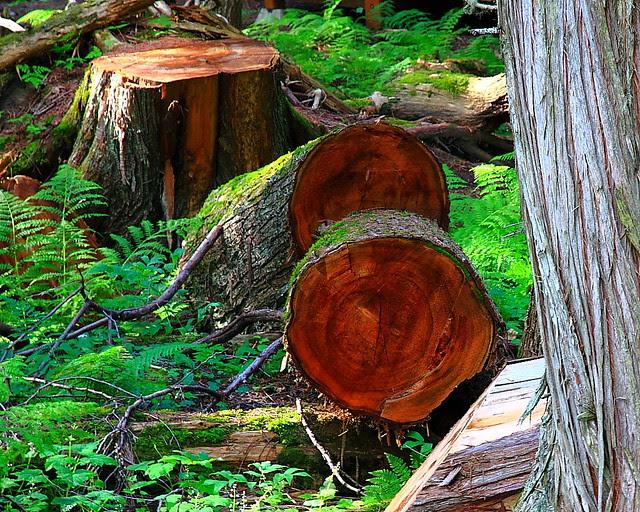 IMG_2543 Trail of the Cedars, Glacier National Park
