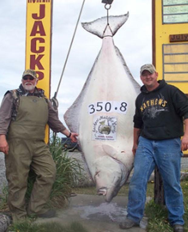 Em junho do ano passado, o americano Chad Aldridge e seu pai, Ron, fisgaram um peixe de 159,12 quilos próximo à cidade de Homer, no Alasca. Eles levaram uma hora e 20 minutos para conseguir erguer ao barco o peixe enorme. (Foto: Divulgação/ Homer Halibut Derby)