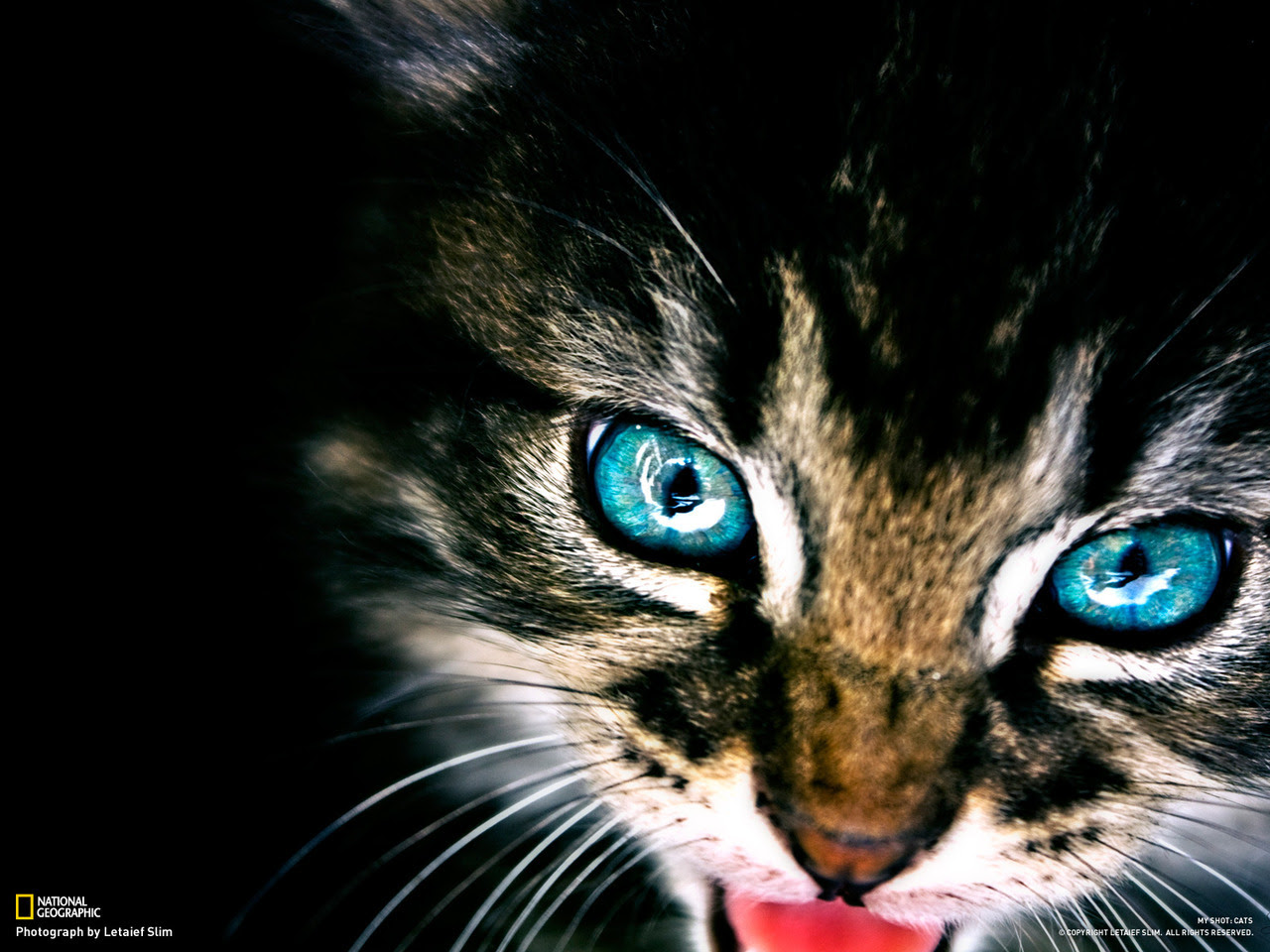 http://24.media.tumblr.com/tumblr_m8j99bRUFa1r388myo1_1280.jpg
