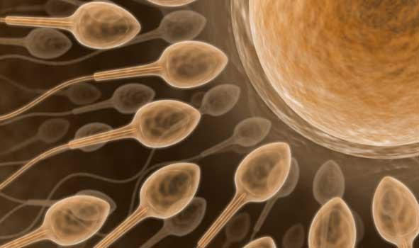 http://www.scienceprogress.org/wp-content/uploads/2007/11/sperm.jpg