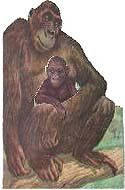 Gambie Gorilla Who Was So Lonely by Roselle Ross
