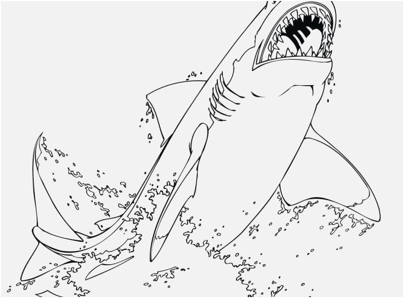 Shark Coloring Pages For Adults at GetColorings.com | Free ...