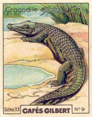 gilbert reptile 9