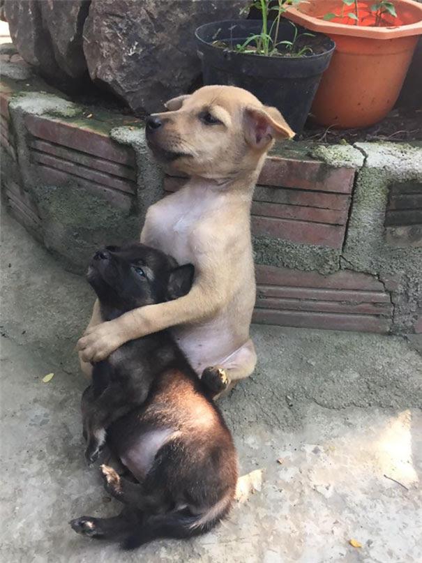 cachorrinhos-abandonados-na-param-de-se-abracar-desde-que-foram-resgatados-2
