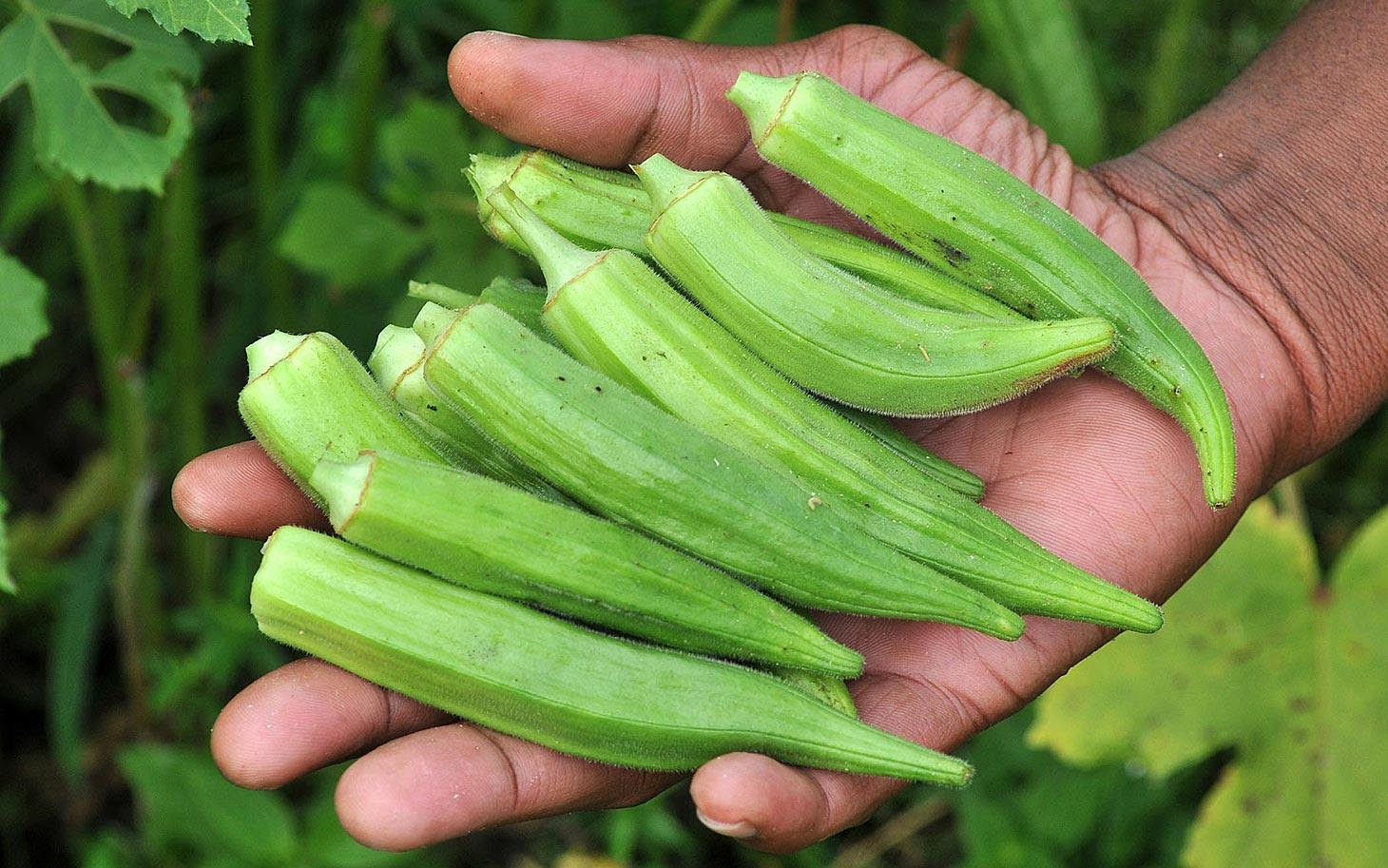What Happens With You When You Eat Okra? You Would Love This!
