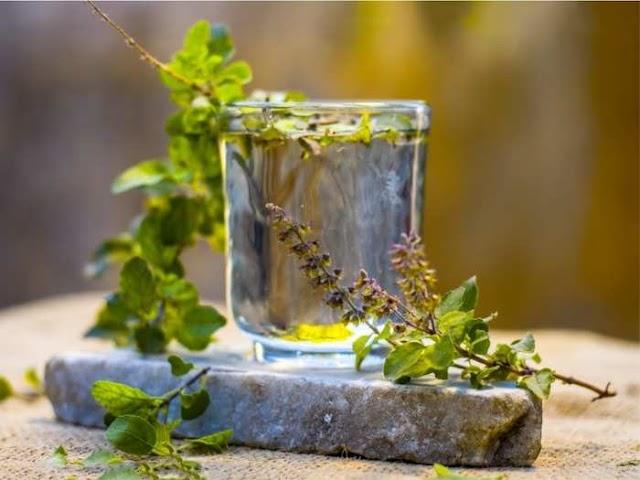 कई बीमारियों से बचाता है एक गिलास तुलसी का पानी, फायदे जानकर नहीं होगा विश्वास