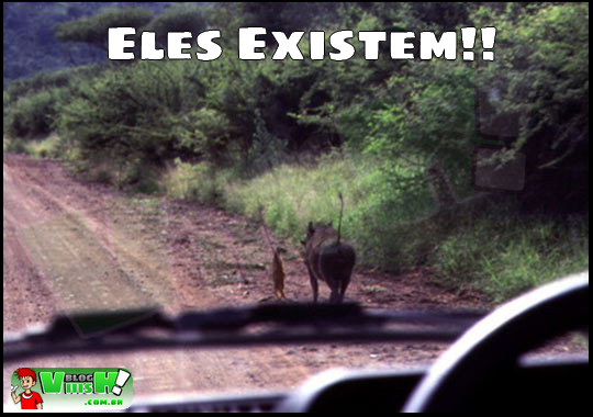 Blog Viiish - Timão e Pumba existem!