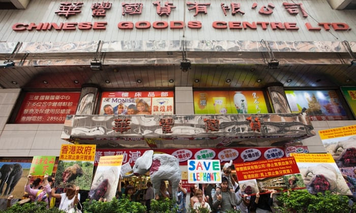 Hong Kong animal welfare and wildlife conservation activists protest against alleged illegal trade of ivory, outside the Chinese Goods Centre, a store that sells African elephant ivory products, in North Point, Hong Kong, China, 29 October 2014. According to reports, in the Hong Kong governmennt-issued 'ivory possession licence' presented by the store, the name of the ivory supplier had been redacted. Activists allege that the the city's legal trade in ivory is providing a cover for newly poached ivory from illegally killed African elephants to enter the market.