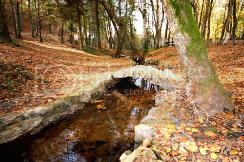 a little bridge over a stream
