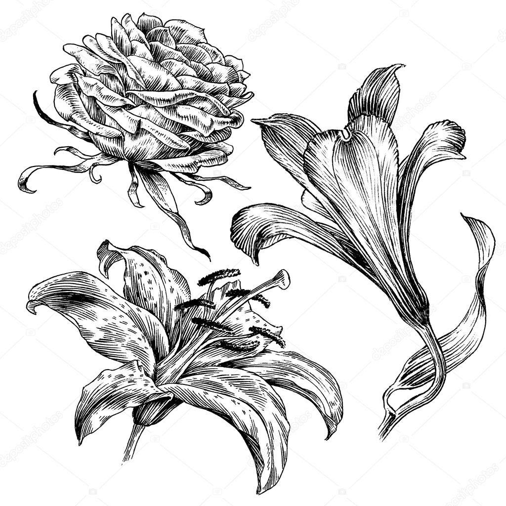 Free Free 331 Retro Flower Flower Outline Svg SVG PNG EPS DXF File