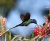 Little Pretty Bird