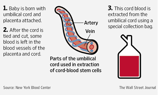 Image result for cord blood