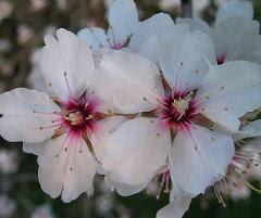Floristería Margarita Milenium - Flores Blancas