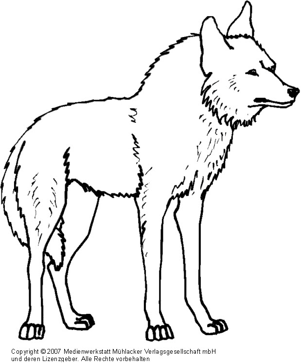 Wolf 2 - Medienwerkstatt-Wissen © 2006-2017 Medienwerkstatt