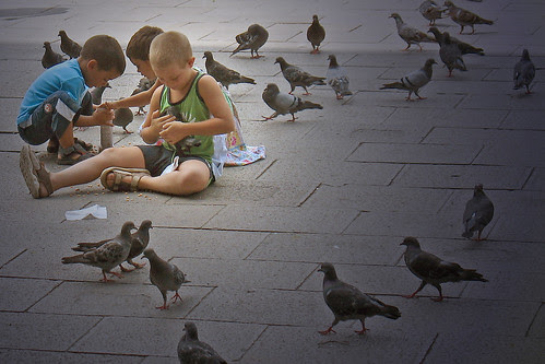 The pigeon whisperer by bekahpaige.