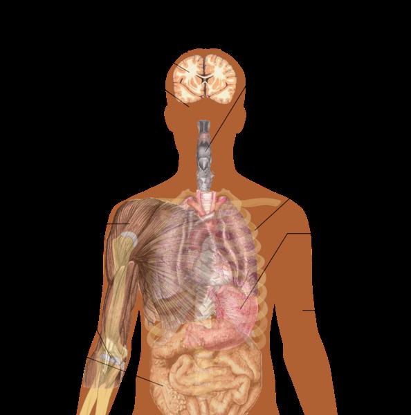 File:Symptoms of ebola.png