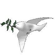 Esta pombinha da paz voa de site em site.