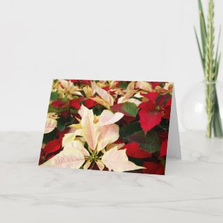 Poinsettia Collection card