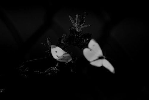 ShamansDream by ░S░i░l░a░n░d░i░